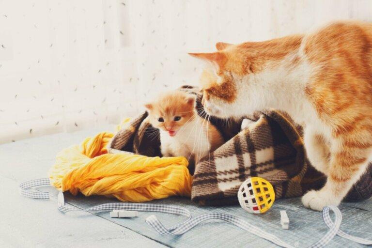 Calore post-partum nei gatti: informazioni utili