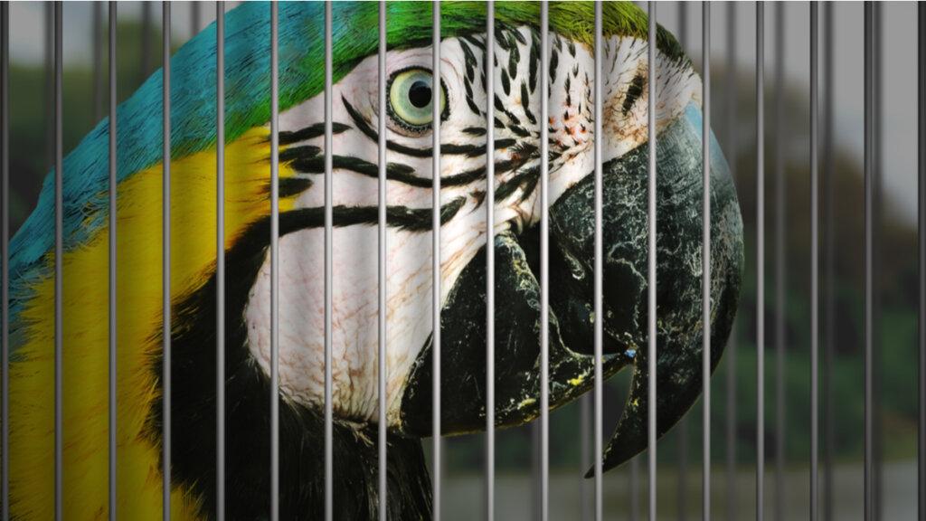 7 uccelli domestici in pericolo di estinzione