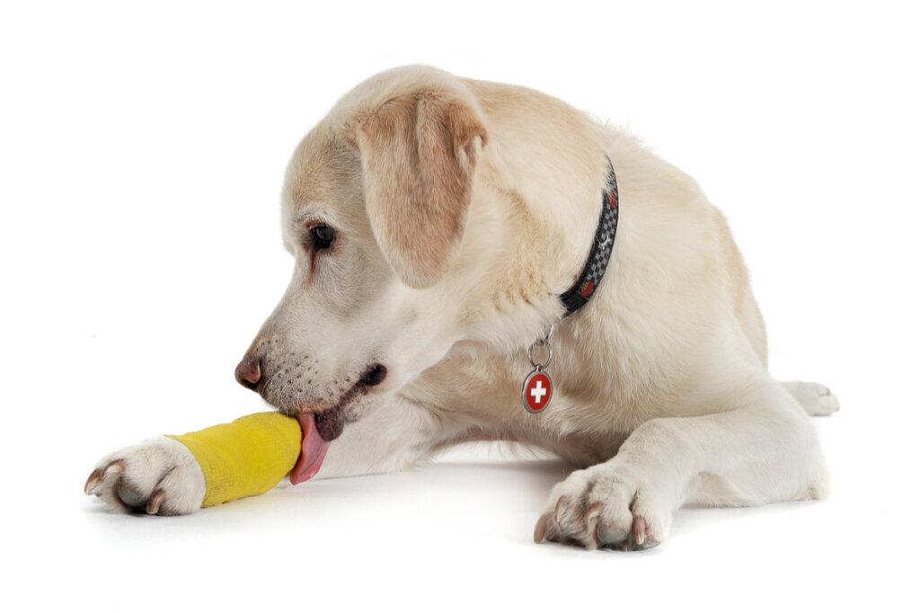 Distorsione nei cani: cause, sintomi e trattamento