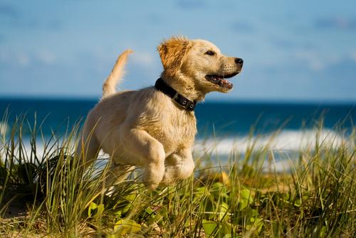 10 segreti che il tuo cane non ti svelerà sulla sua salute