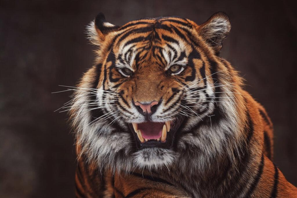 8 mammiferi in via di estinzione