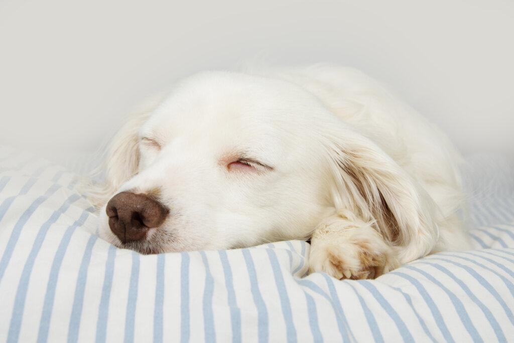 Botulismo nei cani: caratteristiche, cause e trattamento