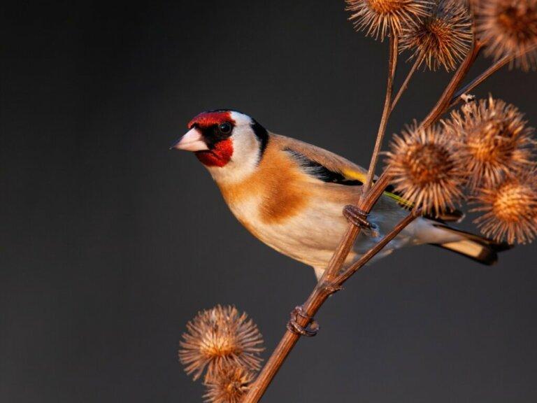 I 10 uccelli che cantano meglio