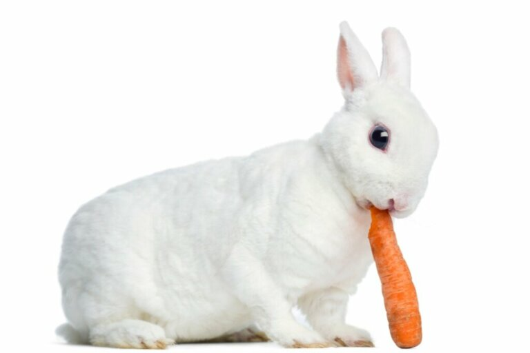 Il comportamento dei conigli