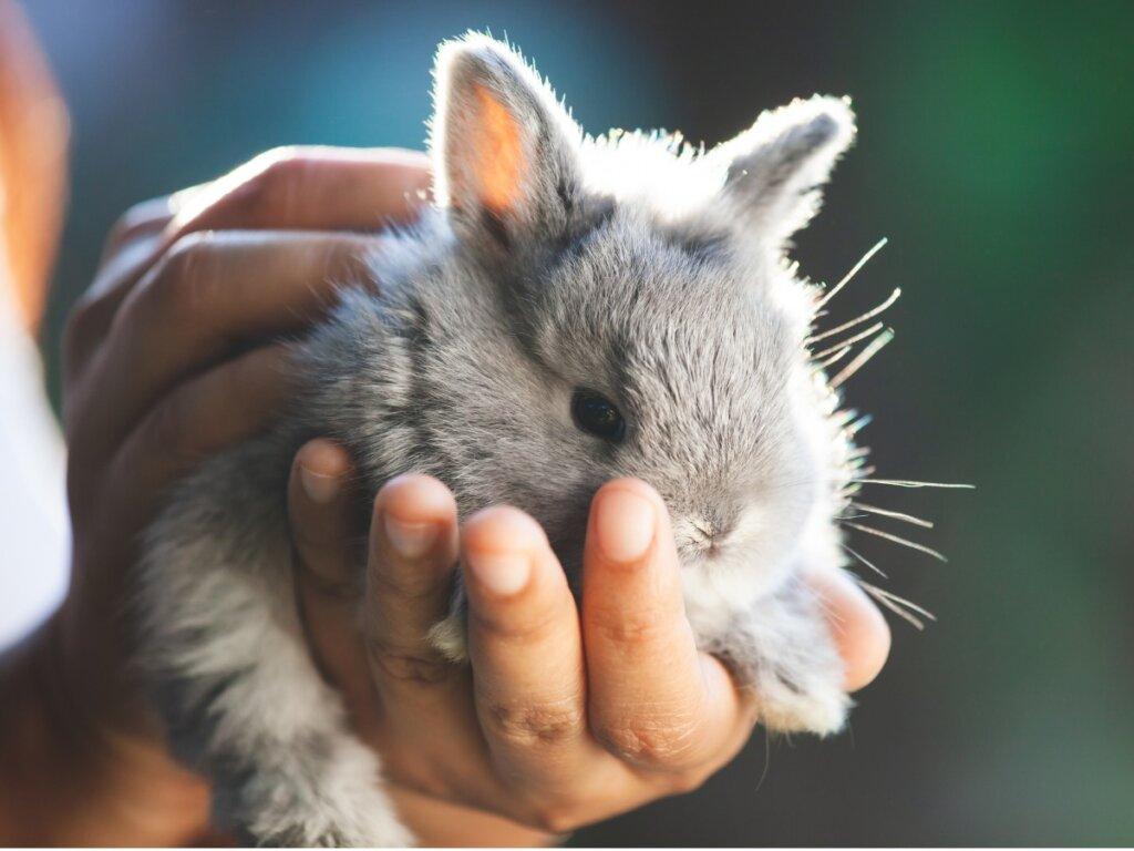 Come tagliare le unghie a un coniglio