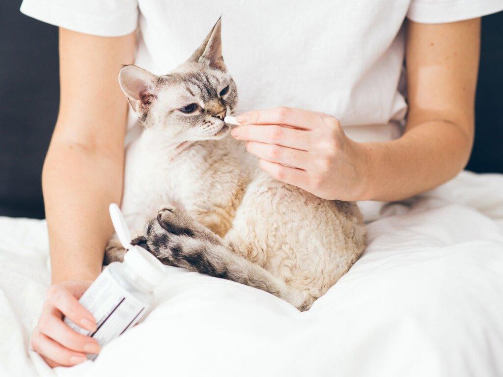Buprex per gatti: dosaggio ed effetti collaterali