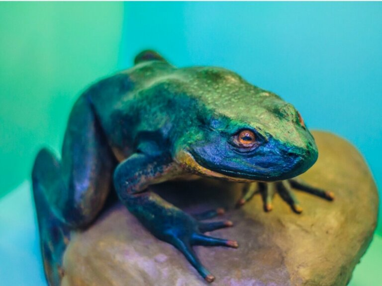 Rana golia: habitat e caratteristiche