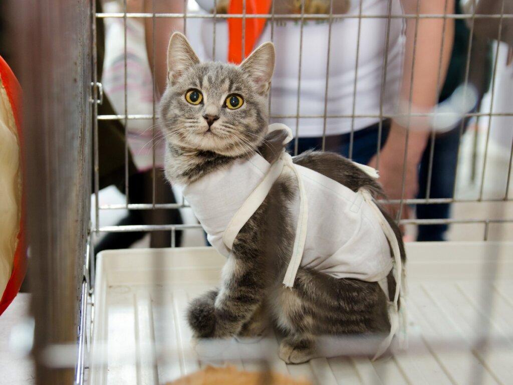 Come prendersi cura di un gatto sterilizzato