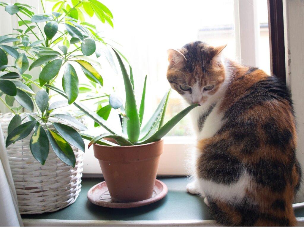 Aloe vera per gatti: usi e benefici