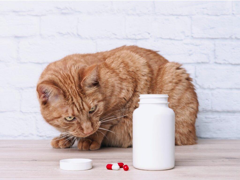 Nolotil per gatti: usi e dosaggio