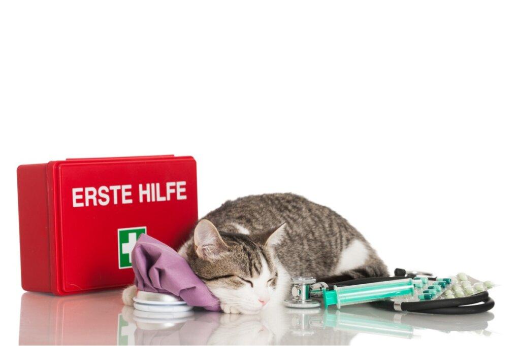 Kit di pronto soccorso per gatti: tutto quello che c'è da sapere