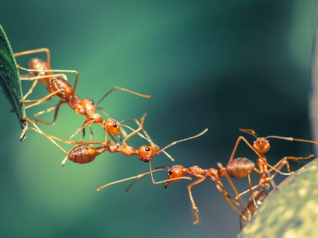 12 curiosità sulle formiche