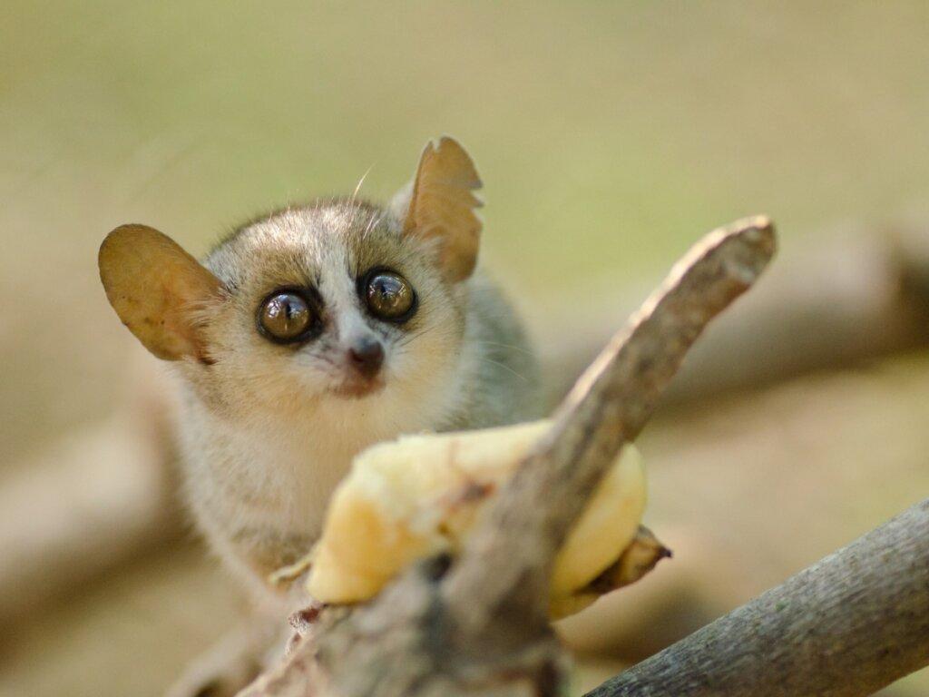 I 10 mammiferi più piccoli del mondo