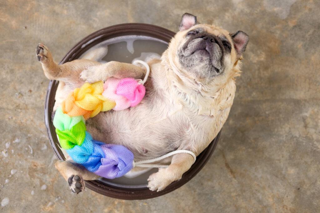 Fare il bagno al cane con un sapone neutro: sì o no?