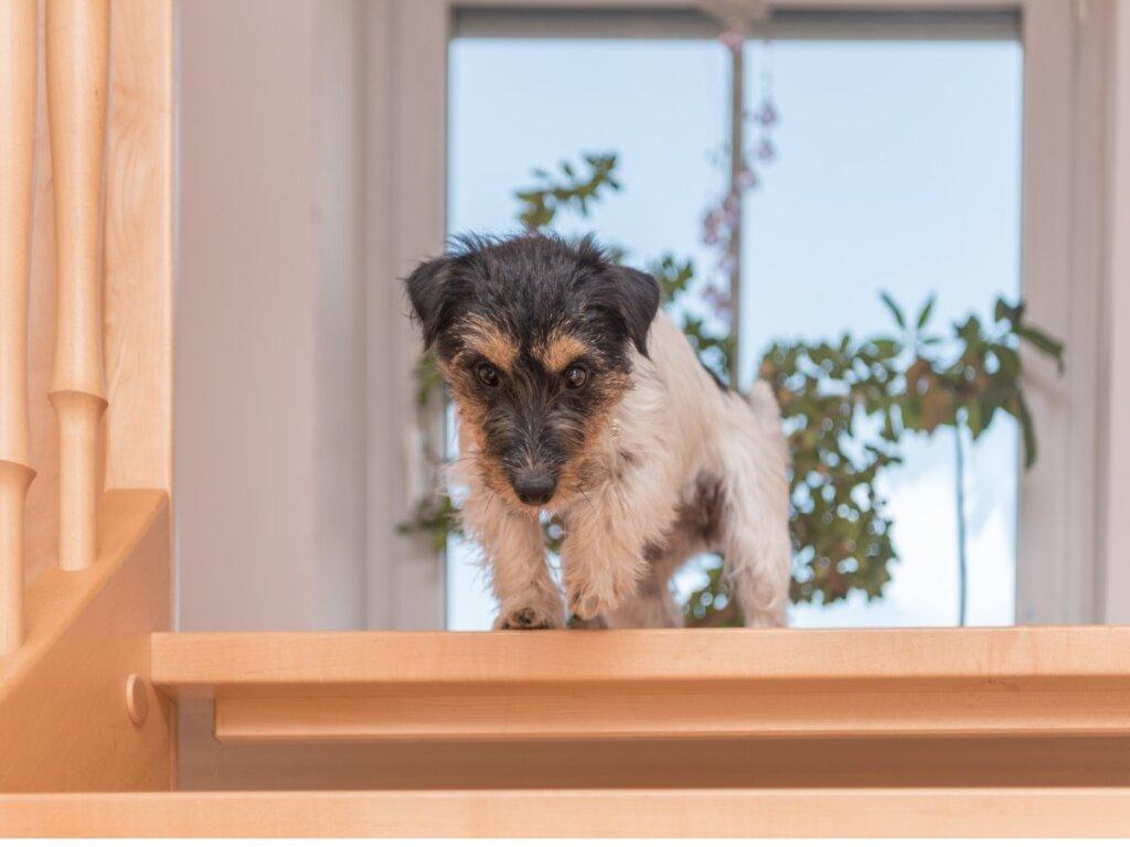 Il cane ha paura delle scale: cause e rimedi