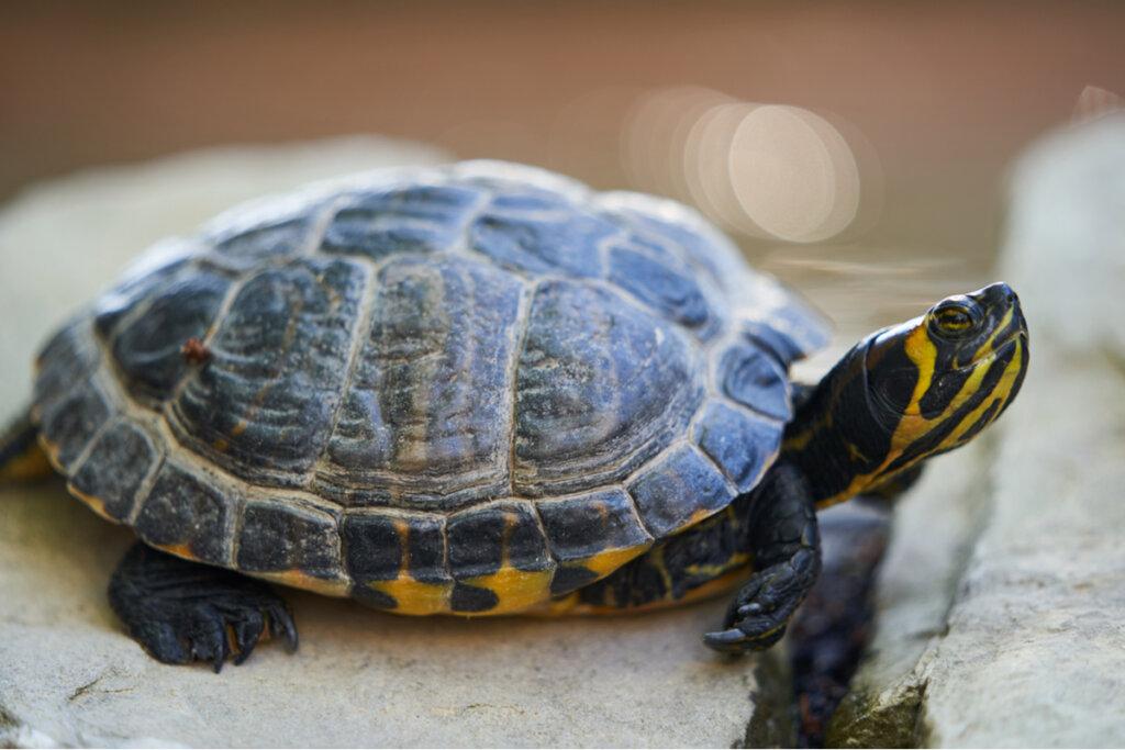 100 nomi per tartarughe