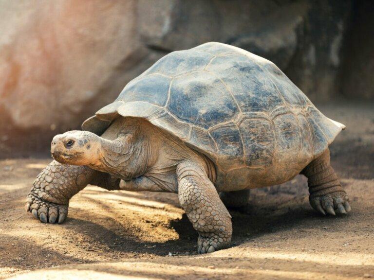 Le tartarughe: caratteristiche e comportamento
