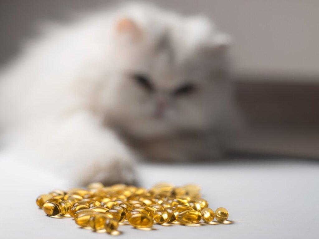 Olio di pesce per gatti: 14 benefici