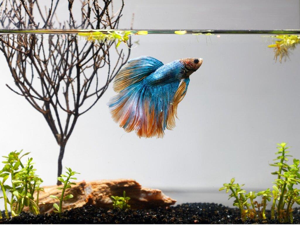 10 pesci per un piccolo acquario in casa