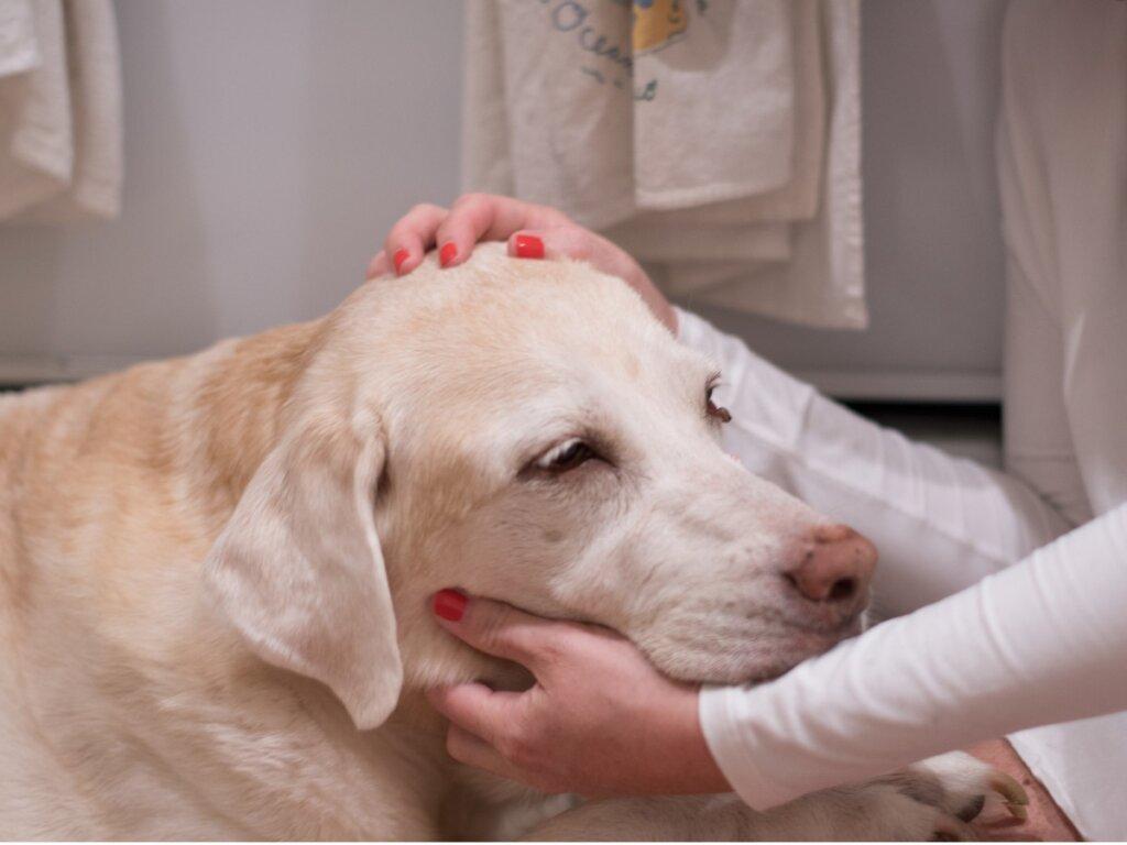 12 segni del cancro nei cani