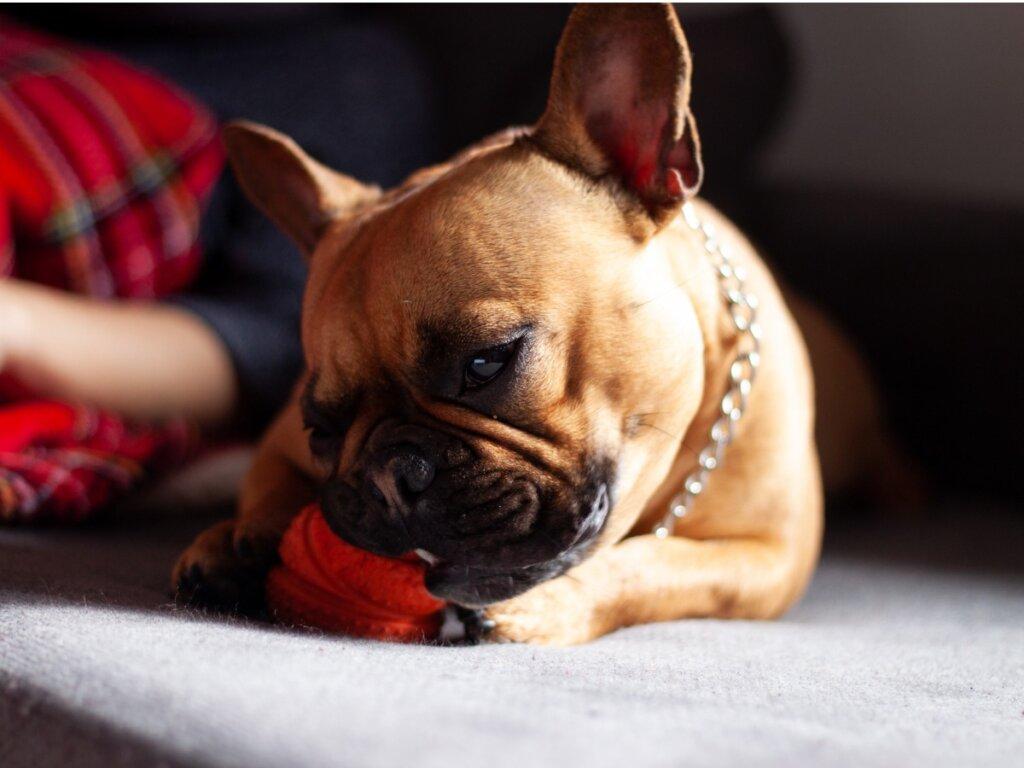 I cane ha mangiato plastica: cosa fare?