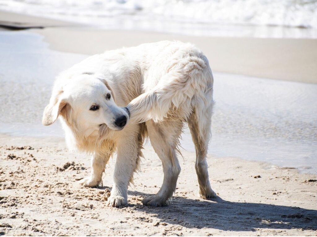 Perché i cani si mordono la coda?