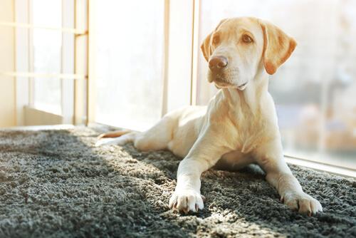Come cambia il carattere di un cane sterilizzato