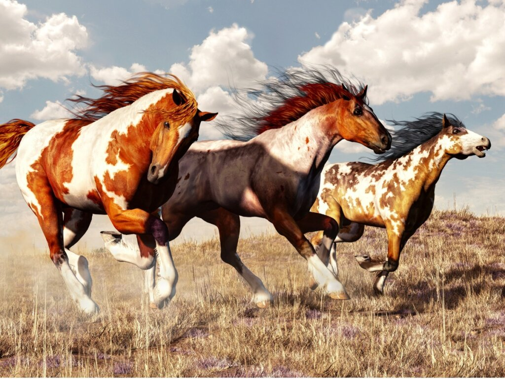 Cavallo Mustang: origine e caratteristiche