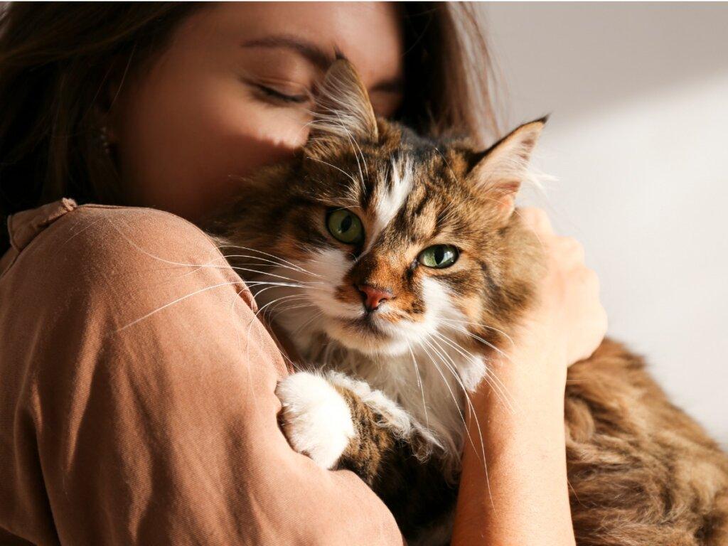 I gatti sono gelosi?