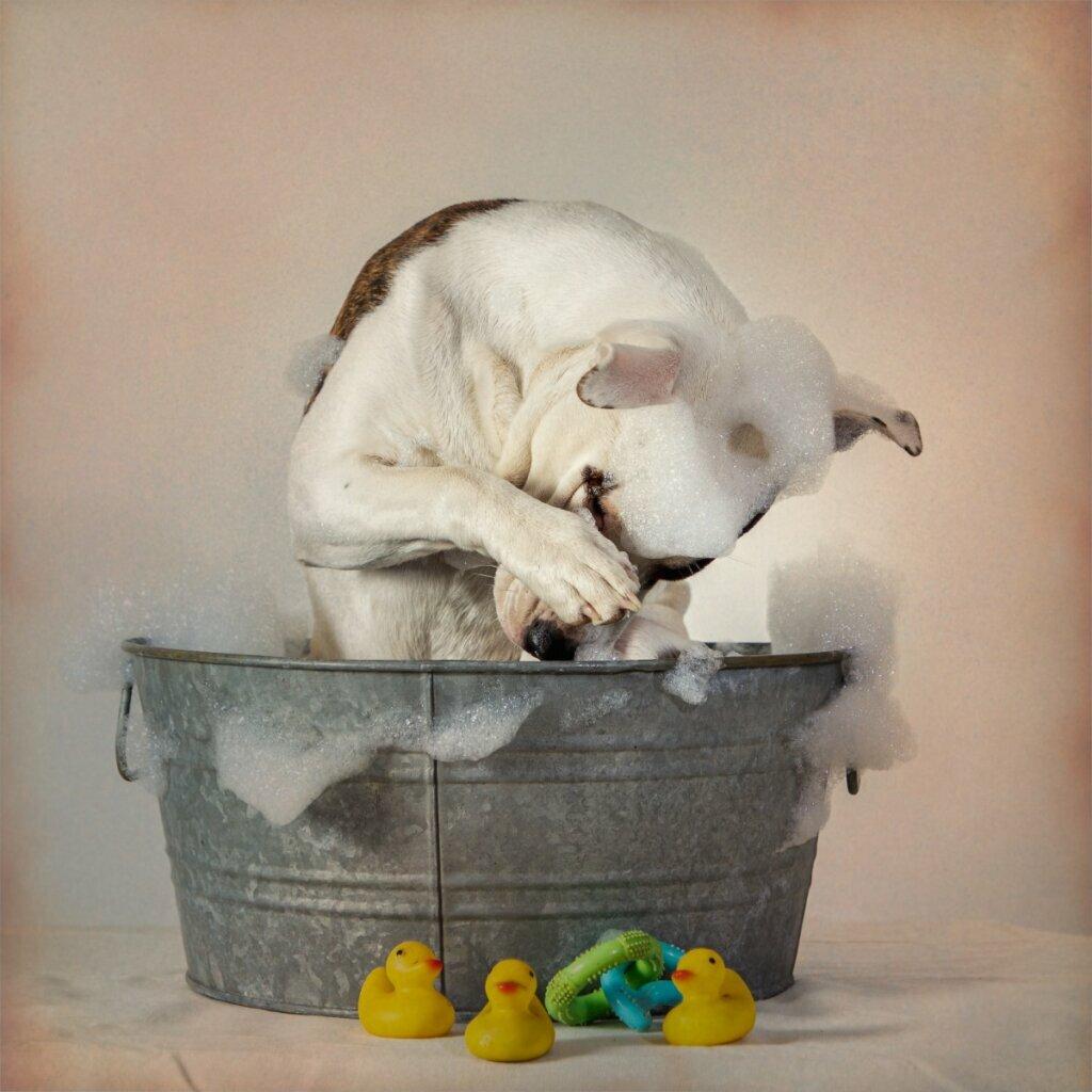 Il cane ha mangiato il sapone: cosa fare?