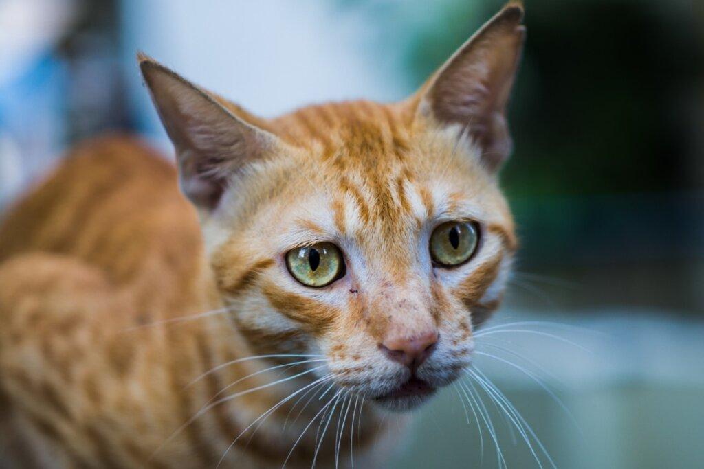 Anoressia nei gatti: tutto quello che c'è da sapere