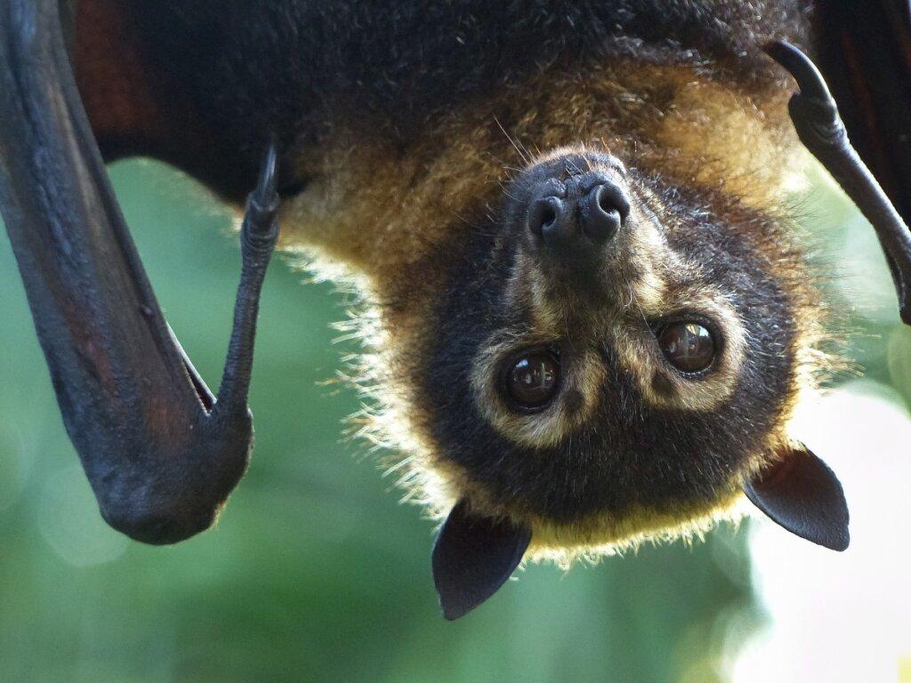 5 tipi di pipistrelli e la loro particolare dieta