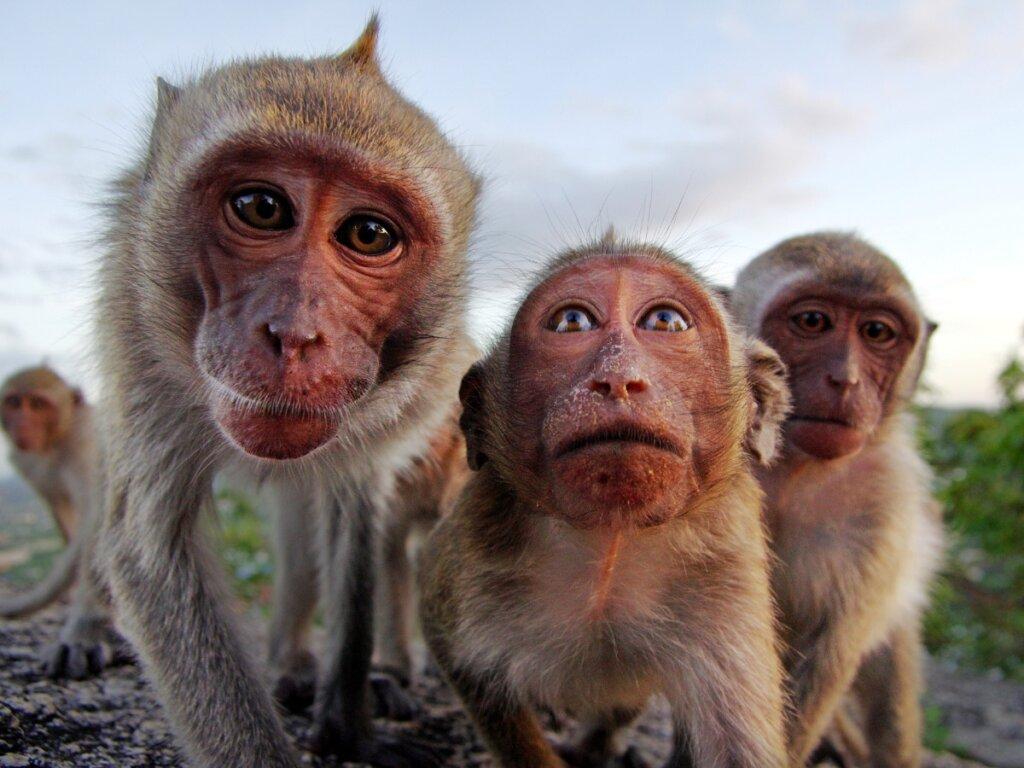 """Il comportamento dei primati, affascinanti """"quasi"""" umani"""