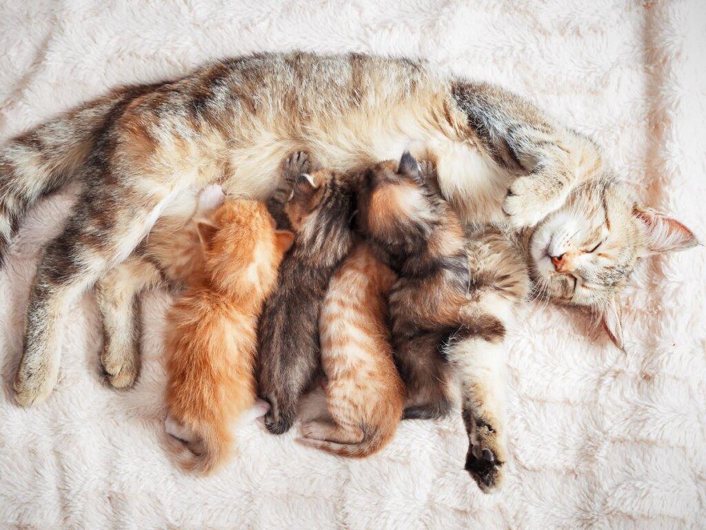 Tumore alla mammella nei gatti: cause, sintomi e trattamento