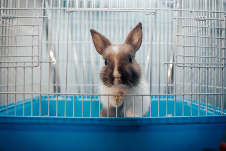 Perché i conigli sbattono le zampe?