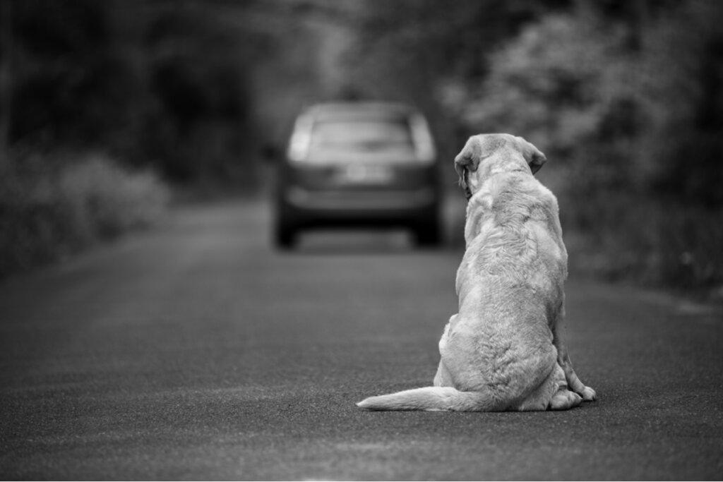 10 modi per aiutare un cane abbandonato