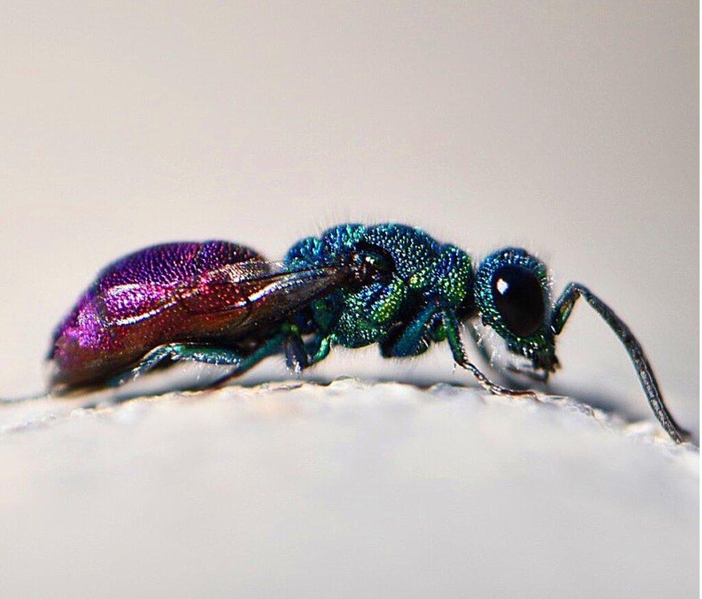 I 15 insetti più belli del mondo