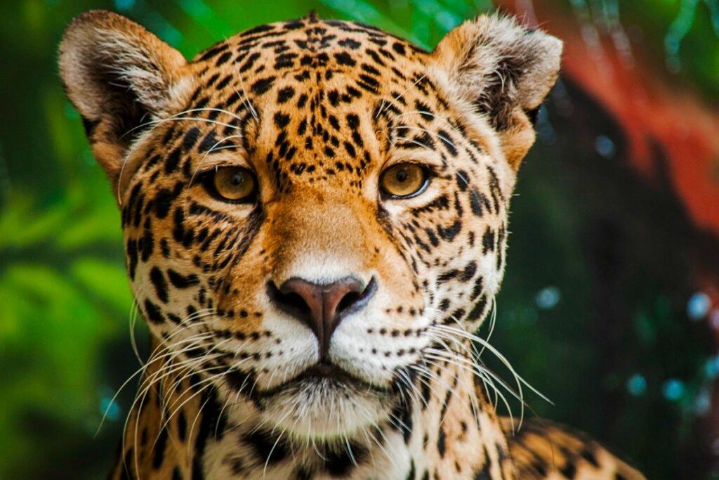 I 15 animali più pericolosi dell'Amazzonia