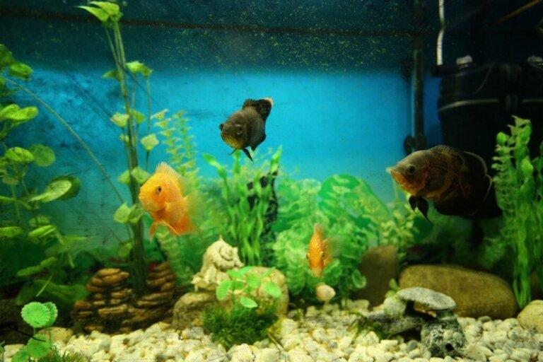Acqua torbida nell'acquario: cause e soluzioni
