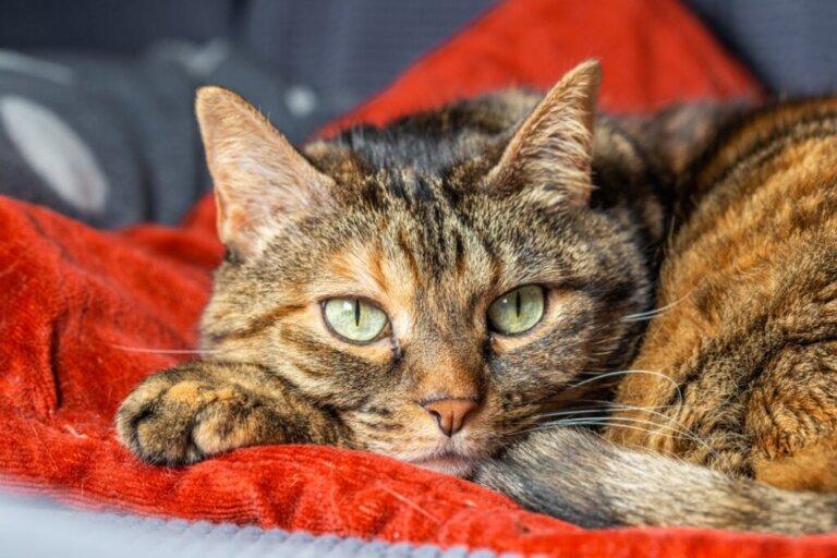 Anche i gatti possono soffrire di ansia da separazione