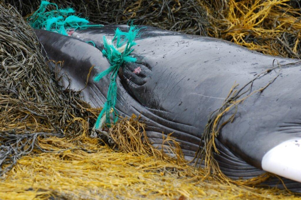 Delfini, balene e tartarughe: vittime dell'inquinamento sulle spiagge dello Sri Lanka