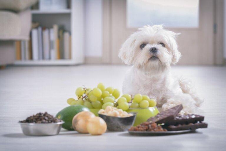 I cani possono mangiare le noci?