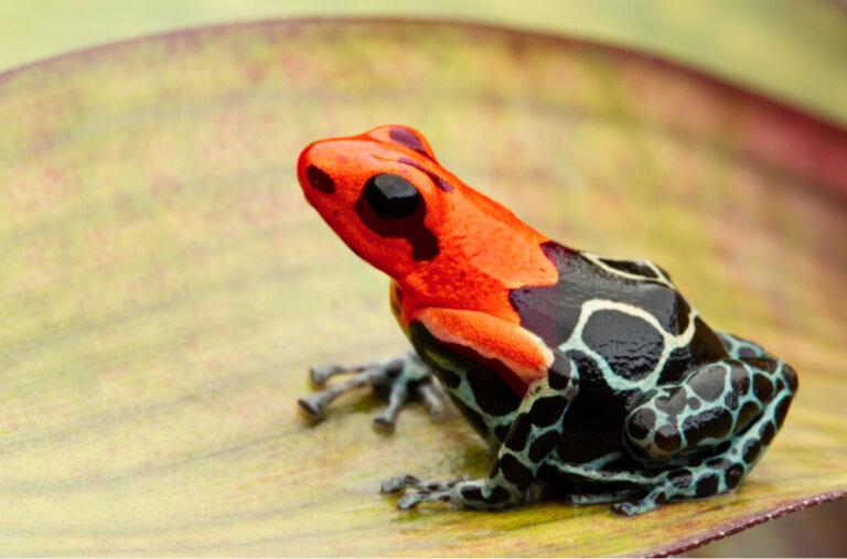 7 tipi di anfibi velenosi