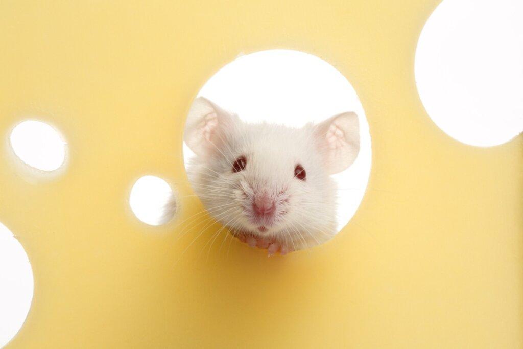 Ai topi piace il formaggio?