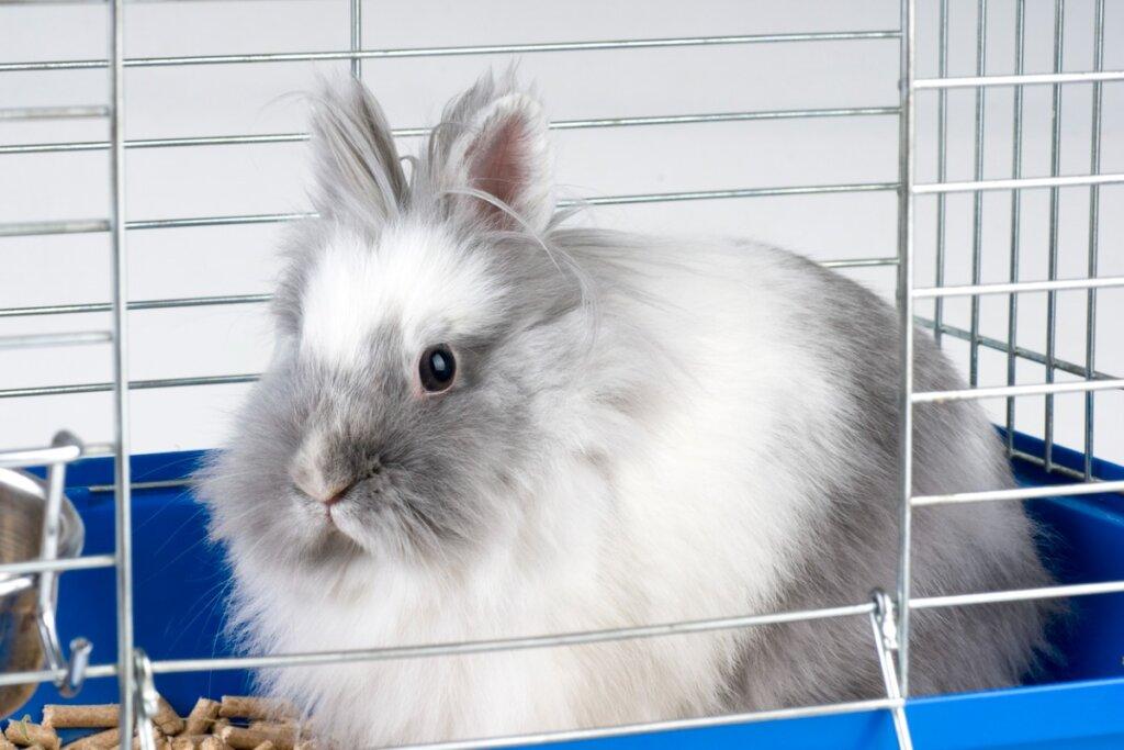 Il coniglio morde la gabbia: cause e rimedi