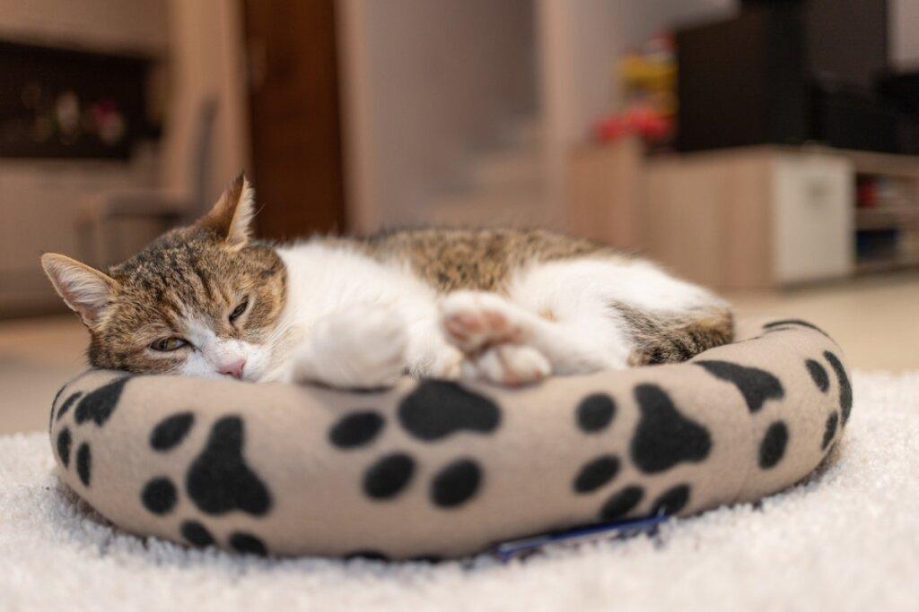 Come creare una cuccia per gatti ideale