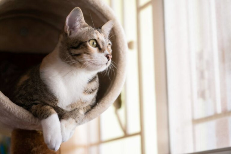Come realizzare una palestra per gatti in casa