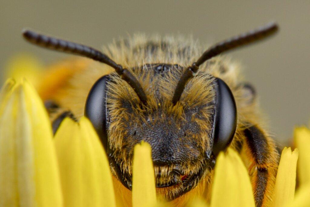 Come vedono le api?