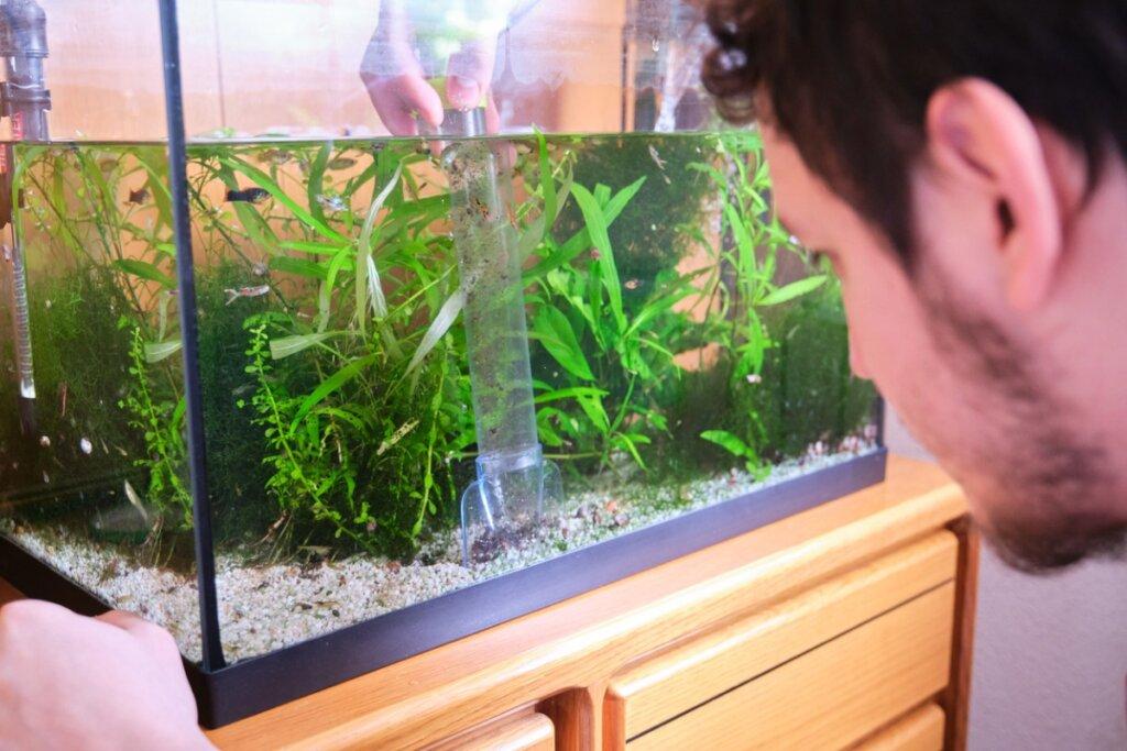 Acqua verde in acquario: cause e soluzioni