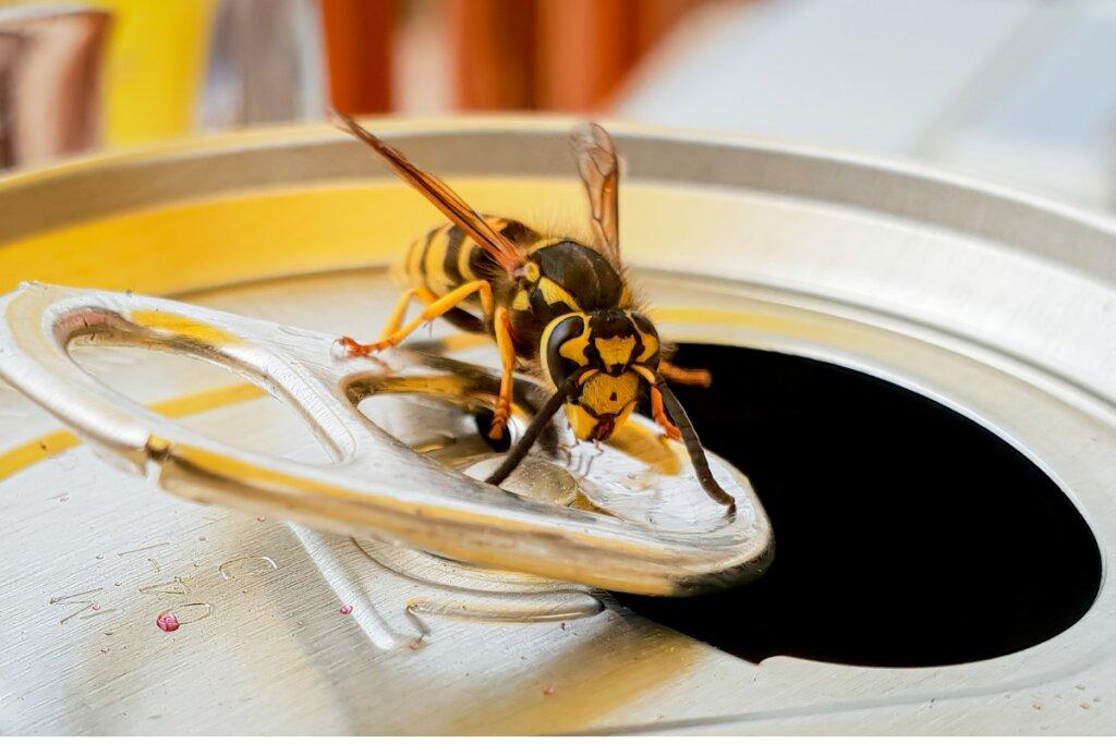 Cosa mangiano le vespe?